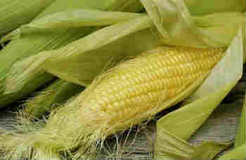 Полезные свойства кукурузных рылец_ початок