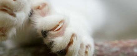 Болезнь кошачьих царапин_лечение