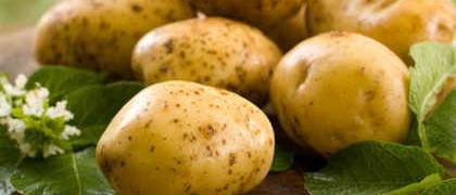 Полезные свойства картофеля_клубни