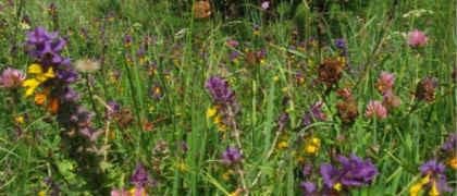 Весенние травы_поле