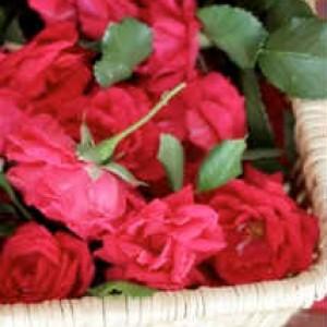 Варенье из лепестков роз_ бутоны роз в корзине