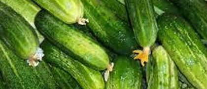 Рецепт засолки огурцов холодным способом