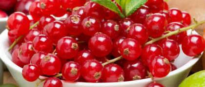 Полезные свойства красной смородины_ветка с ягодами