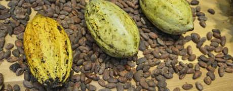 Масло какао в косметологии_для кожи
