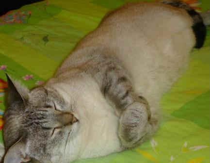 Кошки лечат болезни_спящая кошка
