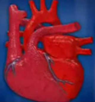 Полезные витамины для сердца_вид органа
