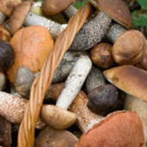 Как мариновать грибы_ собранные грибы