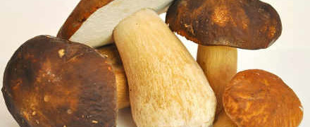 Как мариновать грибы_белые грибы